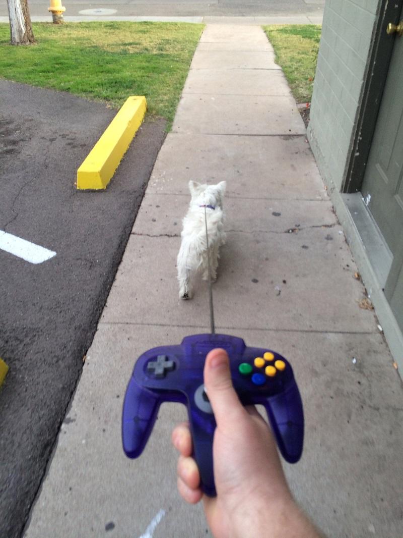 dog-n64