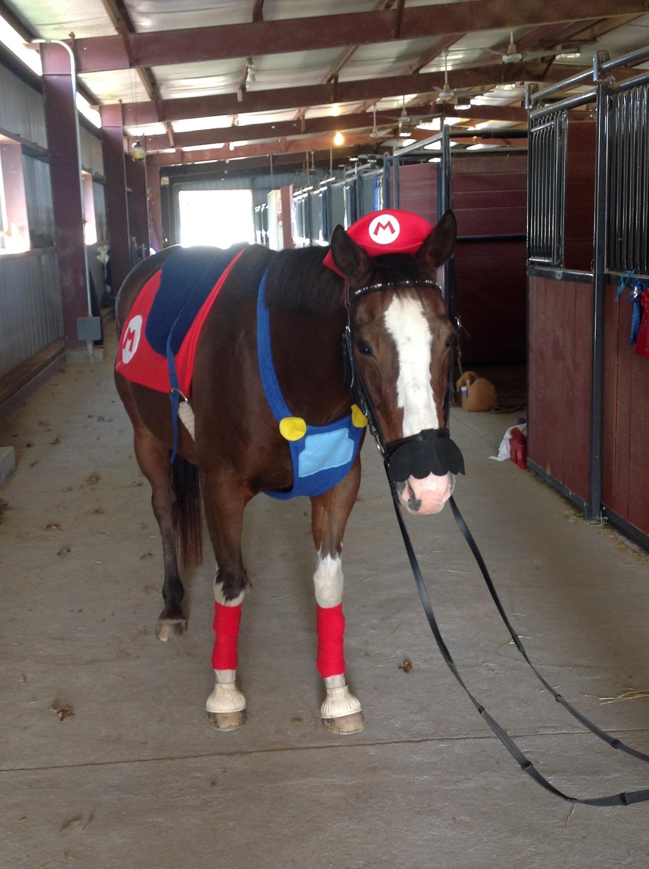 mario-pony