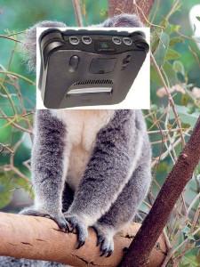 koala-64