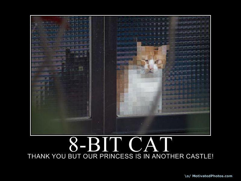 Толкового кота не смущает low-res графика