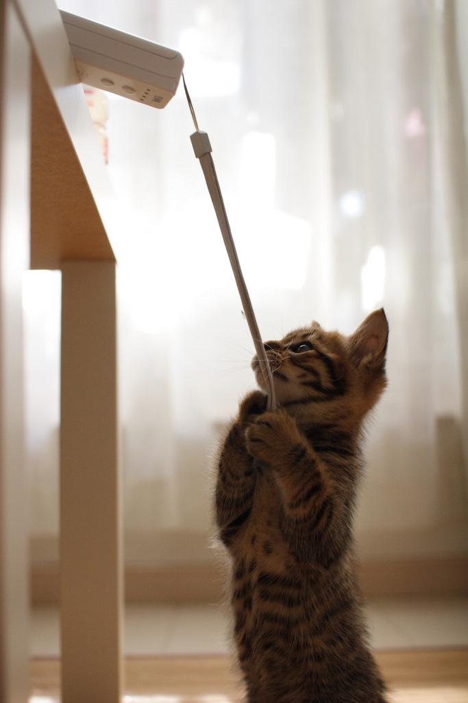 Один раз кот — всегда кот!