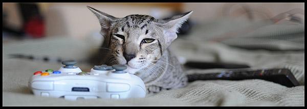 xbox cat