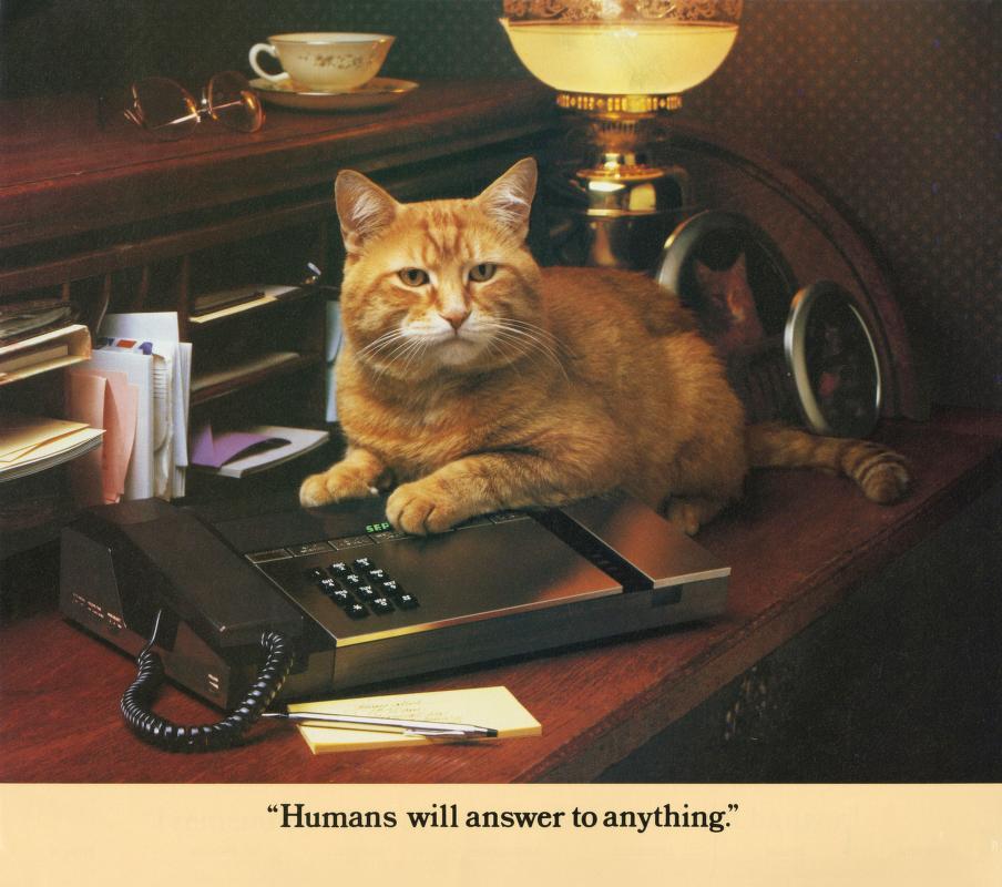 Morris Cat #3