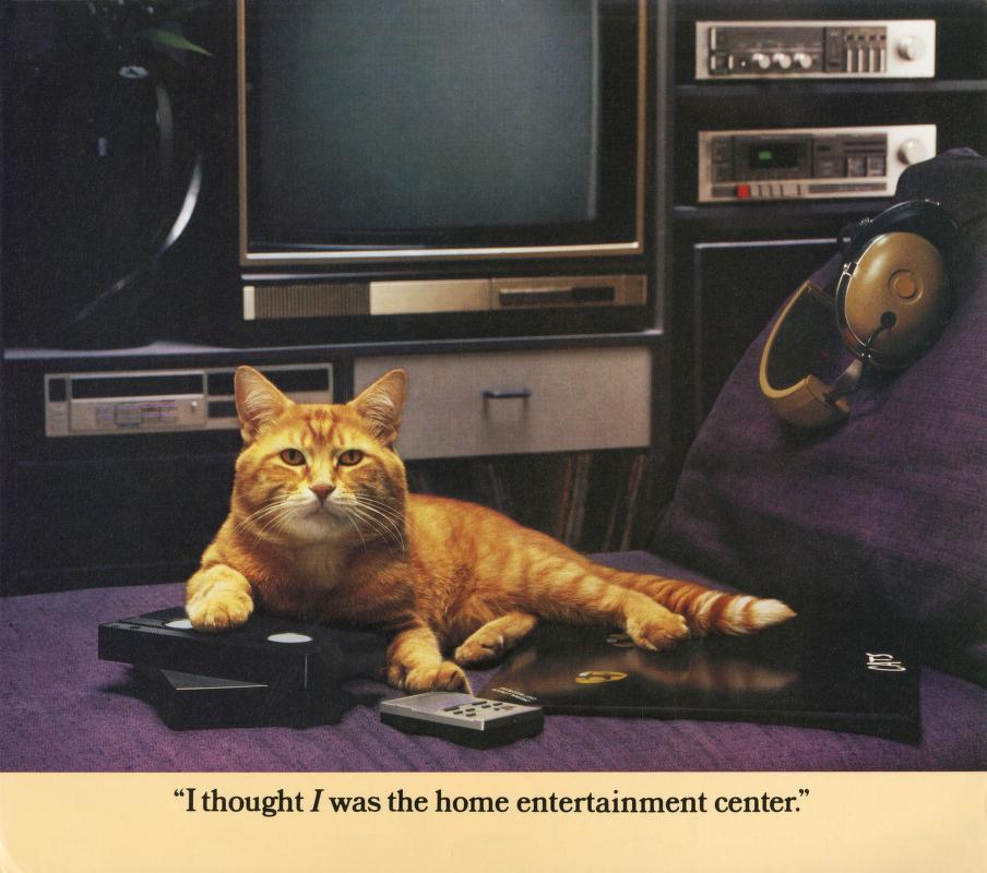 Morris Cat #4