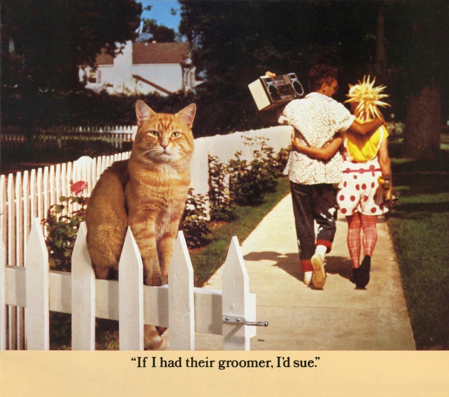 Morris Cat #8